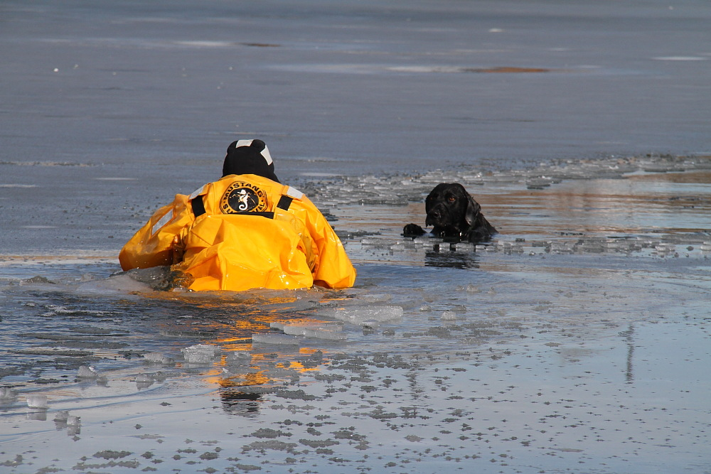 Englewood Dog Rescue