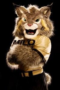 CU Denver announced its new mascot, a Canada lynx named Milo, on Thursday.