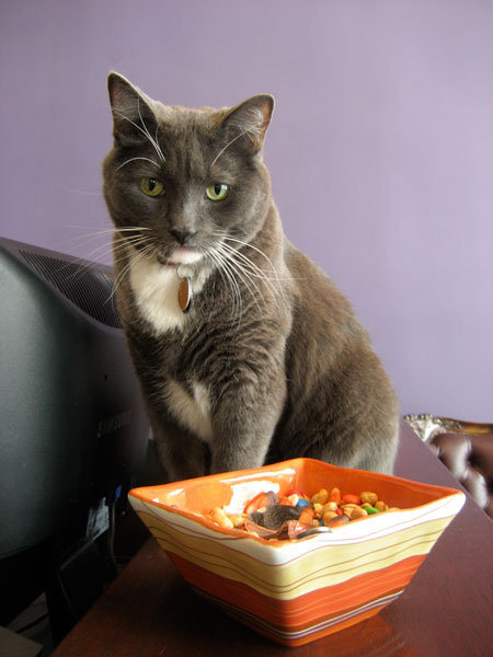Oreo the cat. Photo courtesy: Armstrong Hotel