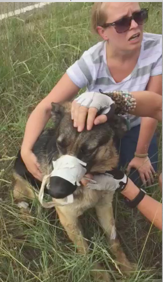 Dog found with mouth duct taped shut, paws taped together in Denver. (Photo: Kassi Leiding)