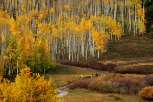 Fall colors in the Kebler Pass area of Colorado. (Photo: Purestock)