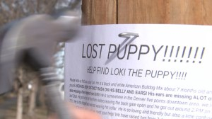 Lost puppy flyer