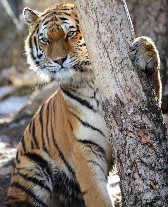 (Photo: Cheyenne Mountain Zoo)