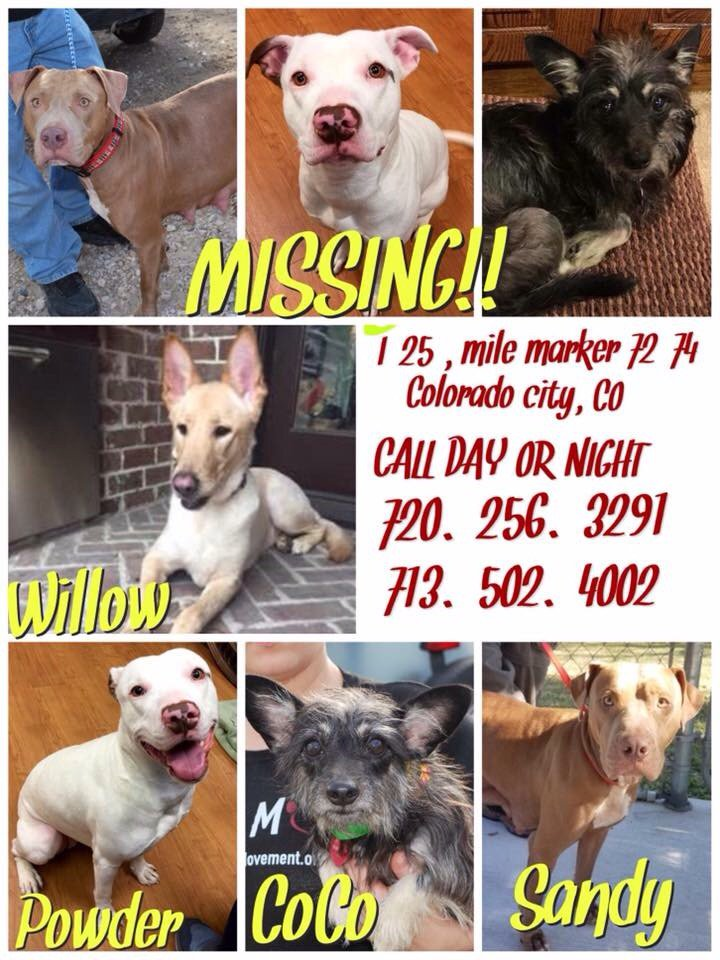 missing-dogs