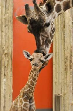 (Photo: Denver Zoo)