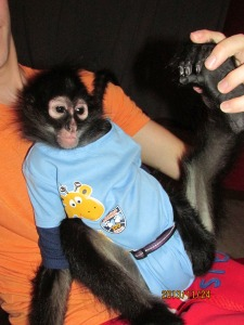 Brodi the monkey (Photo Credit: Michael Ruehlman)