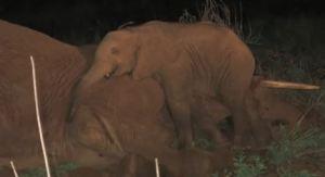 From David Sheldrick Wildlife Trust YouTube page