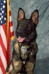K9 officer, Beny (Photo from Montville Police Dept.)