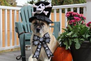 Oz the gentleman pirate