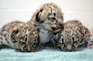 (Photo courtesy: Akron Zoo)
