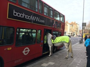 The number 43 bus traveling through North London's borough of Islington caught the attention of Jersey politician Simon Crowcroft, who was visiting friends in London on Tuesday morning. Crowcroft snapped some now-viral photos of Invictor, a horse assigned to police constable Dan Smith of the Metropolitan Police's Mounted Branch, as it tried to board the bus.
