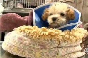 puppy, trash, san francisco