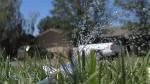 Sprinkler pic