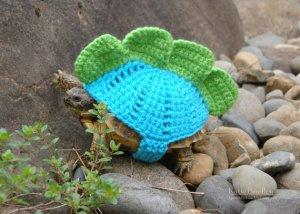 tortoise-cozy-1