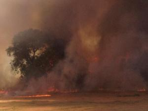 Cal Expo grass fire