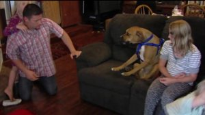 Family Says Service Dog was Not Trained