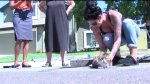 Cat Rescued from Rocklin Storm Drain