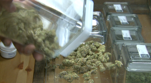City leaders talk medical marijuana