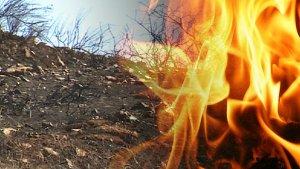 Dry brush fire danger