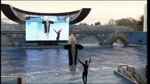 Bill Aims to Ban Seaworld Orca Show
