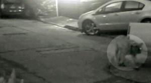 Mountain lion caught on video