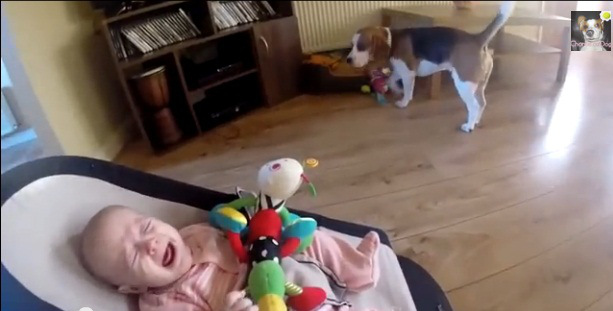 beagle-and-baby-crying
