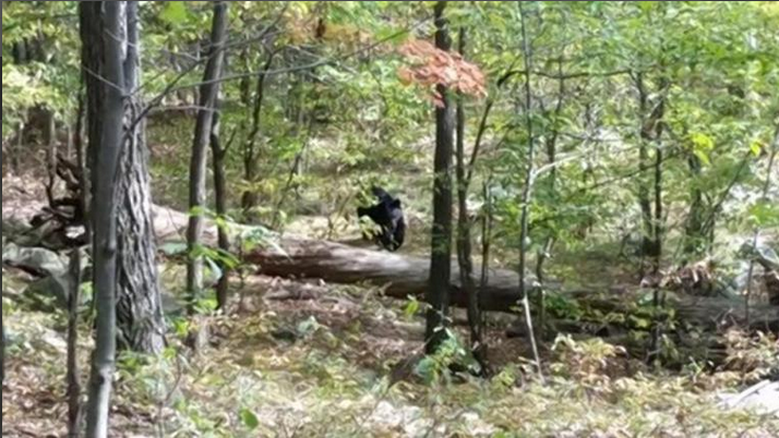Student took pictures of black bear in Apshawa Preserve. (Credit: West Milford Police Department)