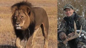 Cecil the lion and Walter Palmer, the American hunter who shot him