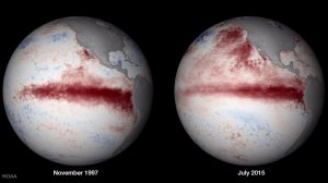 These images show simlar warm currents in 1997 and 2015. The current in 1997 caused a strong El Nino effect.