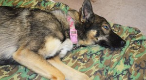 Luna was presumed dead after she went missing on a fishing trip. She was found five weeks later on San Clemente Island. (US Navy)