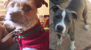 Two dogs were stolen after a fake Craigslist ad was posted.