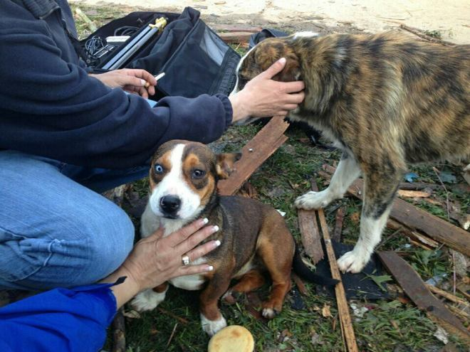 Kathy Quinn discovered to displaced dogs in Moore, Okla., and took them to a shelter where there were claimed by their owner.