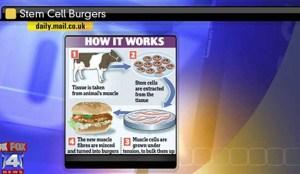 Stem Cell burgers