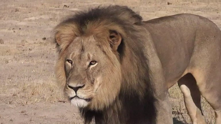 Cecil was reportedly lured from the reserve to be killed.