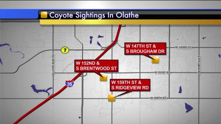 Map of wild animal sightings in Olathe