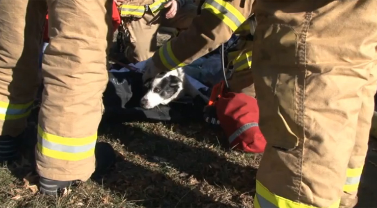The family dog, a border collie named Finley, was found unresponsive, but revived by firefighters. Photo courtesy of the Olathe Fire Department