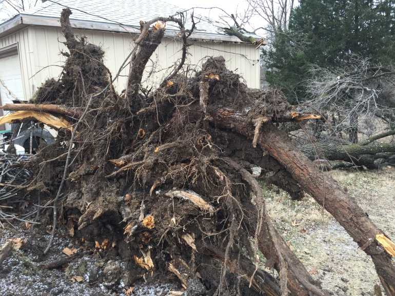 Strong winds uprooted a tree at home at 137 E. Lowell Street Monday morning.
