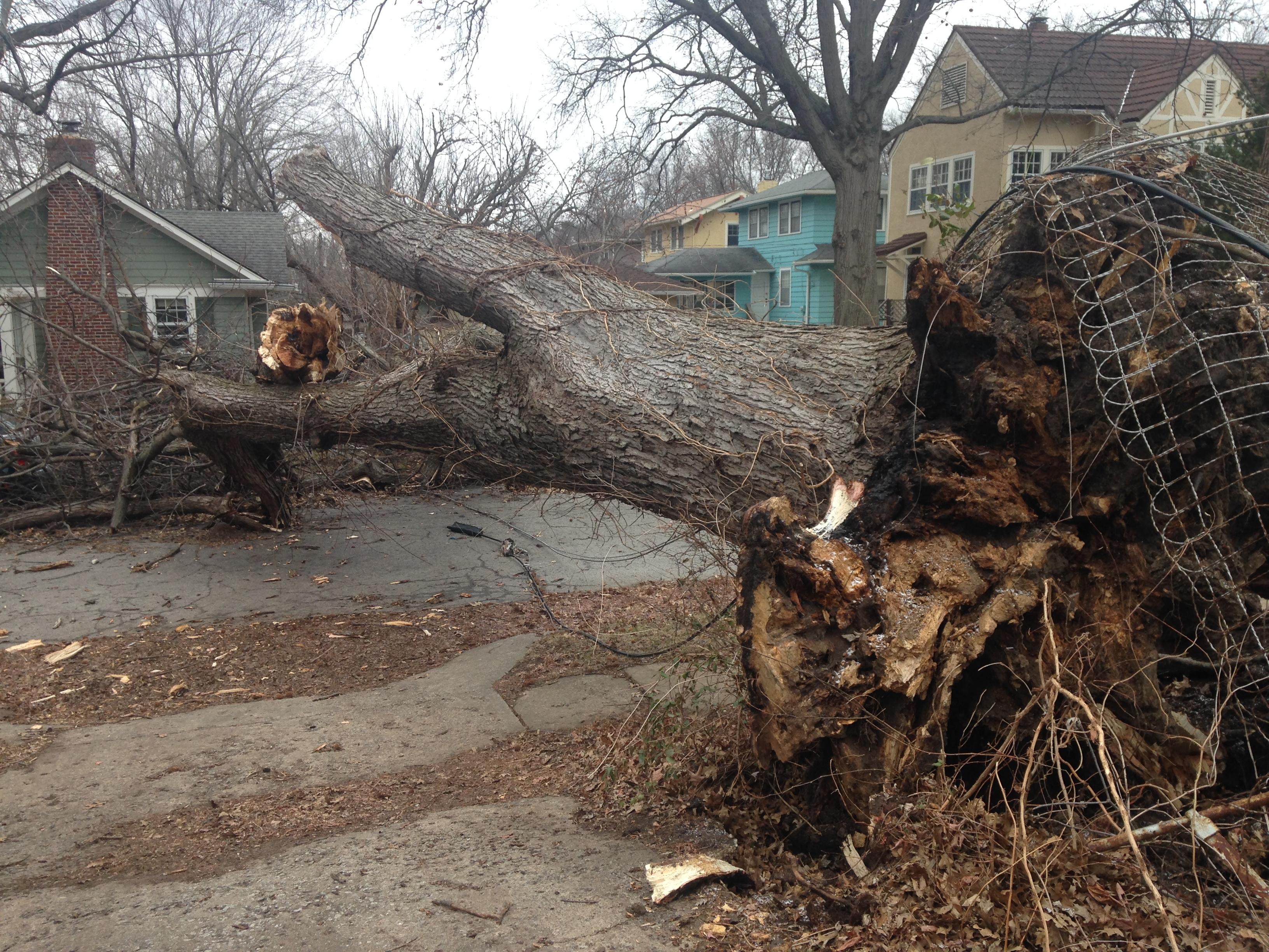 A large fallen tree lies near 60th and Oak.