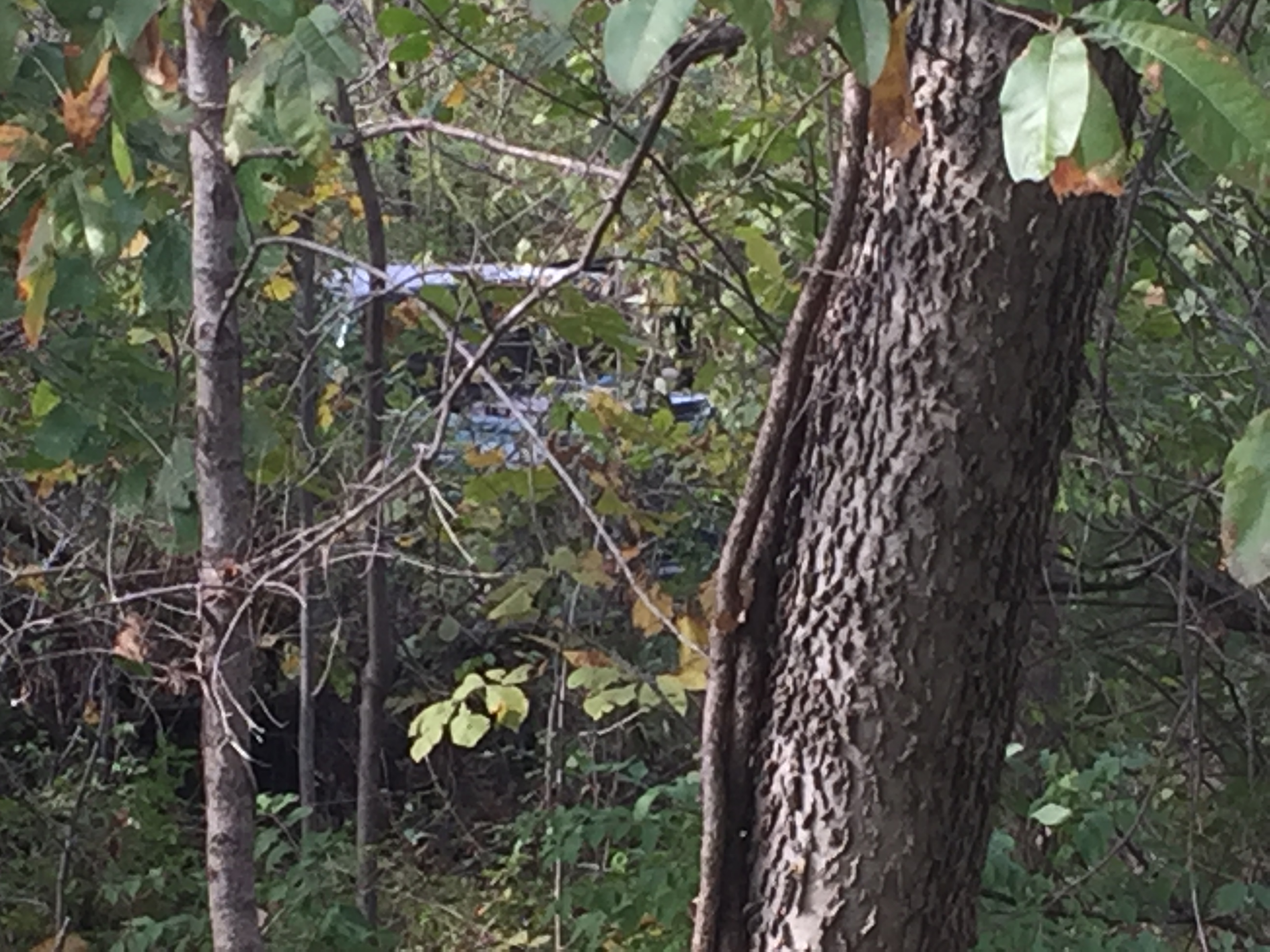 A truck is seen through thick brush where it crashed after suspects fled police.
