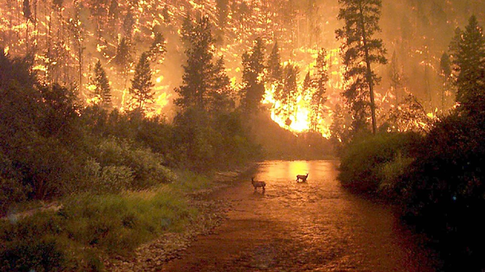Picture of fake Amazon rainforest fire