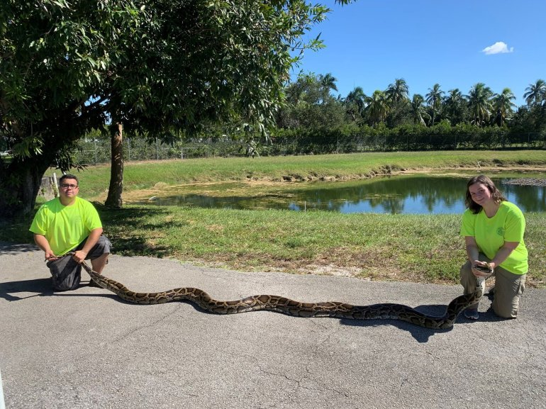Picture of giant snake