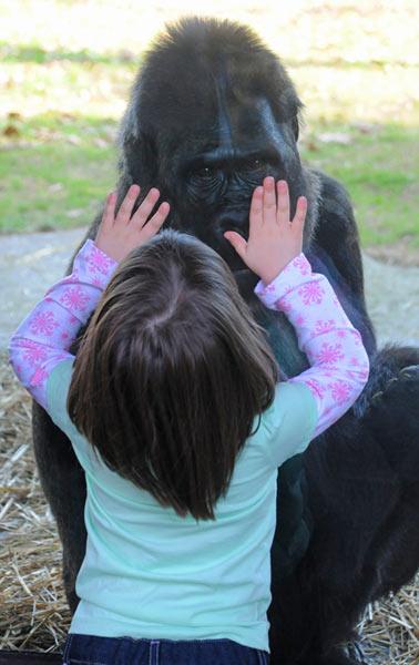 Photo credit: N.C. Zoo // Tom Gillespie