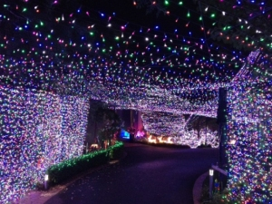 Australian family reclaims world record for Christmas lights