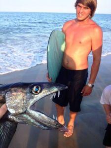lancetfish 2