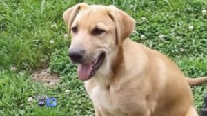 A North Carolina family is heartbroken by the sudden death of Toby, their beloved dog. (WLOS)