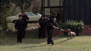 One of two dogs found after a child was attacked Tuesday. The dog that attacked the child was shot and killed.