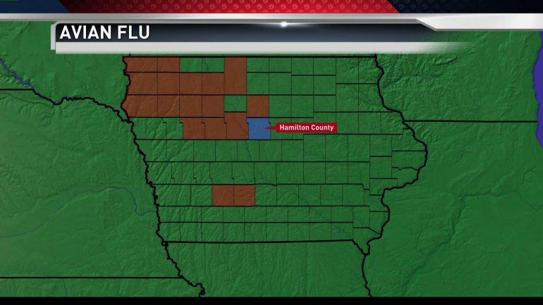 Avian Flu update
