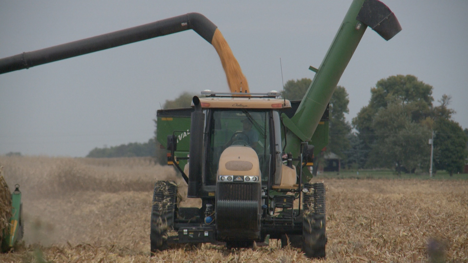 Corn harvest underway near Story City. (Roger Riley WHO-HD)