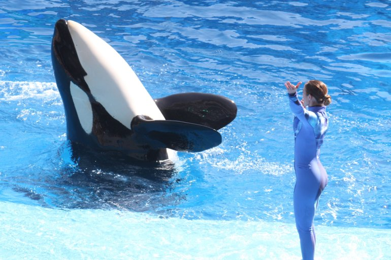 SeaWorld's Killer Whale show 'One World'.