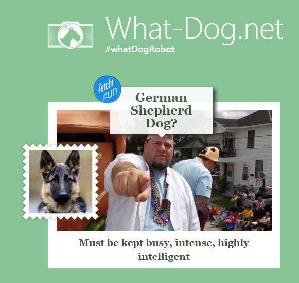 What dog is zurk